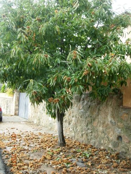 Castaño (Marisol)