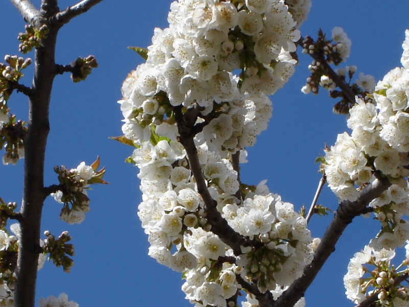 Floración (Antonio C.)