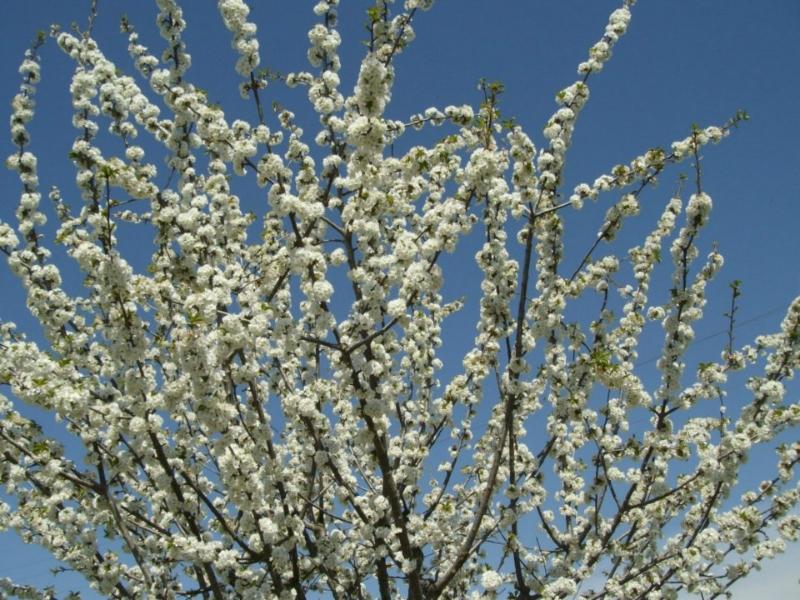 Floración  (Senderismo Los Vettones)