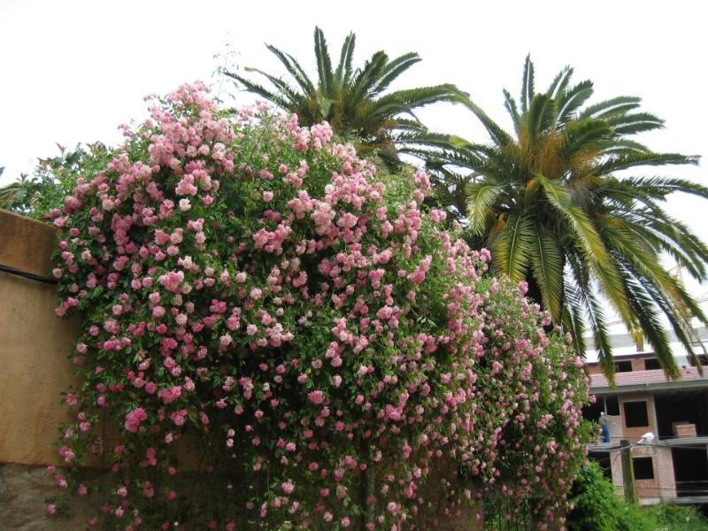 Flores (Senderismo Los Vettones)