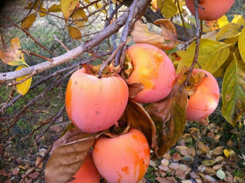 Frutas (Gregorio)