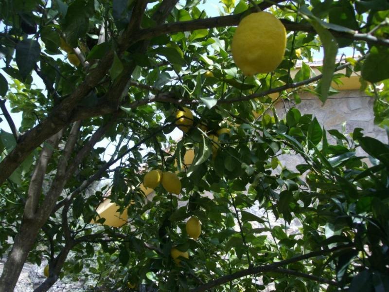 Limón (Senderismo Los Vettones)