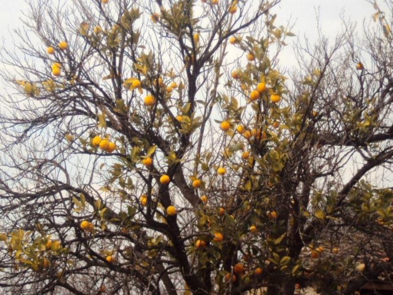 Naranjo (Senderismo Los Vettones)